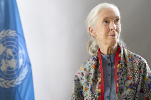 UN Messenger of Peace, Jane Goodall. Photo by United Nations Photo on Flickr Creative Commons.